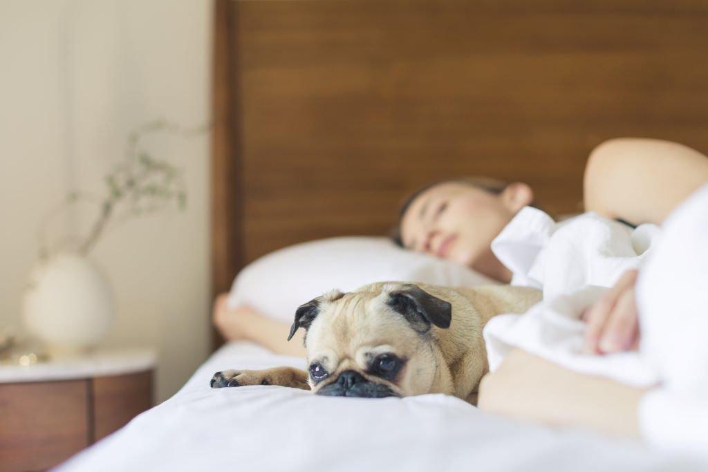 寵物與人躺在床上