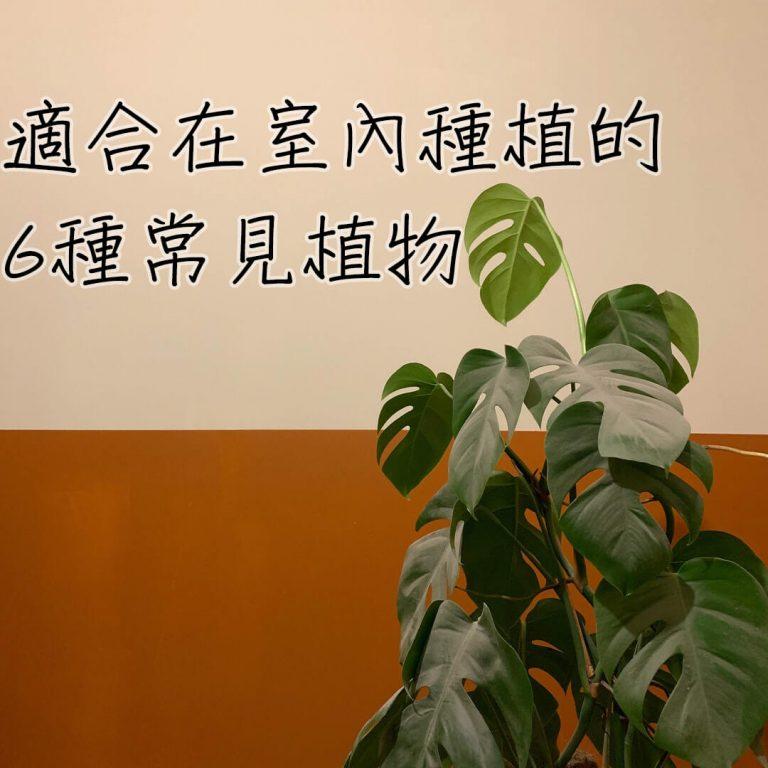 【佈置小知識】6種輕鬆種植的室內植物推薦!增添綠意淨化空氣!