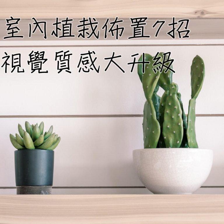 【佈置小知識】室內植物佈置7大招!視覺質感Level UP!