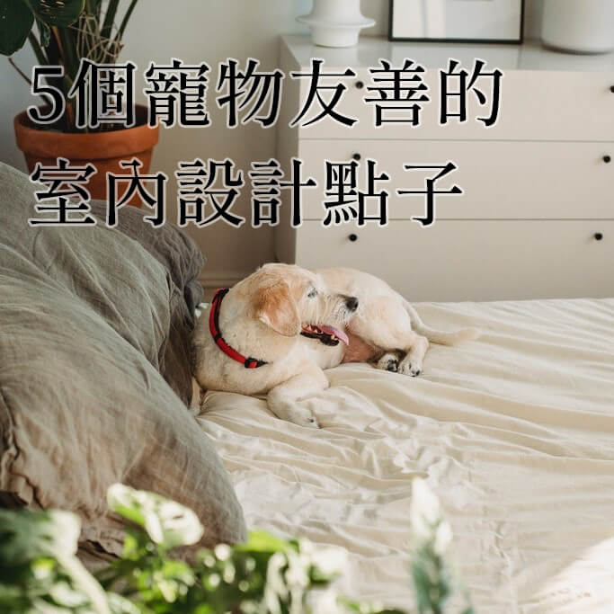 【裝修小知識】5個寵物友善的室內設計!讓毛孩一起過好日子!